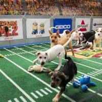 Photo - This undated publicity photo provided by Animal Planet shows dogs playing on the field during