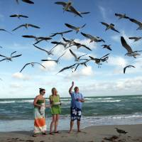 Photo - FILE - In this Sunday, Dec. 11, 2011 file photo, Preslee Rakes, left, her mother Tina Rakes, center, and Brad Cunningham, right, all from Kansas, feed seagulls during a visit to the South Beach area of Miami Beach, Fla. Miami is famous for its beaches, none more than South Beach, which is free and accessible to the public and popular with visitors along Ocean Drive from about Fifth Street up to Collins Park. (AP Photo/Alan Diaz, File)