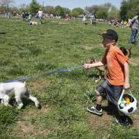 Photo - Lawson Ford, 7, and his dog, Oliver, a schnauzer, look for Easter eggs during Edmond's Hound Hunt.