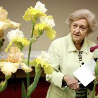 Photo - Mary Colvert Warren inspects an array of irises at the Norman chapter's annual National Iris Society show at the Norman Public Library. PHOTO BY LYNETTE LOBBAN, FOR THE OKLAHOMAN