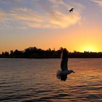 Photo - In this photo taken Feb. 22, 2014, seagulls fly at sunset near the Santa Cruz Municipal Wharf in Santa Cruz, Calif. The wharf is one of several attractions that can be enjoyed for free in this seaside city. (AP Photo/Michelle Locke)