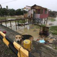 Photo - A dog is chained near a damaged house after Typhoon Bopha made a landfall in Compostela Valley in southeastern Philippines Tuesday Dec. 4, 2012. A Philippine governor says at least 33 villagers and soldiers have drowned when torrents of water dumped by the powerful typhoon rushed down a mountain, engulfing the victims and bringing the death toll from the storm to about 40. (AP Photo/Karlos Manlupig)
