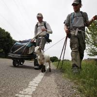 Photo - Matt Gregory, left, and Phillip Aldrich walk with Wrigley along Wilshire Road in Oklahoma City, Tuesday, Jan. 8, 2012. The groups is walking with a a goat  to