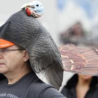 Photo - John McDougal, wearing a turkey headdress, waits for the start of the Turkey Trot.