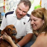 Photo - ERIC TAYLOR / DOG: Daisy the dachsund greets her new owners, Eric and Jane Taylor.  The Taylors are newlyweds and decided to adopt Daisy from the SPCA as a wedding gift to each other.  Tuesday  August 18, 2009  SHERRY BROWN/Tulsa World ORG XMIT: KOD