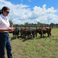 Photo - In this July 28, 2014 photo, ranch owner Liesa Priddy talks about loosing cattle to panthers attacks in Immokalee, Fla. A University of Florida study has found that as the Florida panther population has rebounded, ranchers are loosing more cattle to panther attacks. The study will help determine how to compensate ranchers for their losses. (AP Photo/Jason Dearen)