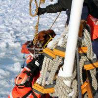 Photo - In this Monday, March 3, 2014 photo provided by the U.S. Coast Guard, crew members assigned to Coast Guard Cutter Bristol Bay hoist aboard the ship a dog they found stranded on the ice of Lake St. Clair, Mich. The dog, who the crew later named