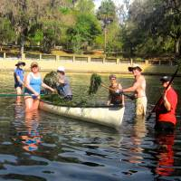 Photo - In this March 2013 photo provided by Chuck Morlock, volunteers remove hydrilla from Salt Spring in the Ocala National Forest, during a work week organized by the Sierra Club, in Silver Springs, Fla. Hydrilla, a non-native species, adversely impacts aquatic ecosystems. The quick-growing plants form a dense canopy that prevents other vegetation from receiving sunlight. (AP Photo/ Charles Morlock)