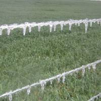 Photo - Ice blankets a wheat field in Northern Canadian County between Banner and Okarche on Wednesday.