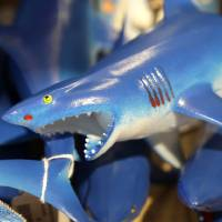 Photo - In this July 2, 2014 photo, a bin is filled with plastic toy sharks in a souvenir shop in Chatham, Mass. With growing sightings of great white sharks off Cape Cod, local entrepreneurs are feeding the frenzy with their shark-themed memorabilia and apparel. (AP Photo/Steven Senne)