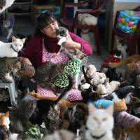 Photo - In this Aug. 2, 2014 photo, Maria Torero, plays with a group of 175 cats with leukemia in her home in Lima, Peru. Torero says caring for cats with feline leukemia is her responsibility. Anybody else can care for healthy animals. (AP Photo/Martin Mejia)