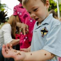 Photo - Asher Laiming reacts as ladybugs crawl up his arm during the ladybug release at the Myriad Botanical Gardens. Photo by Chris Landsberger, The Oklahoman  CHRIS LANDSBERGER - CHRIS LANDSBERGER