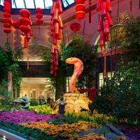 Photo - This January 2013 photo provided by MGM Resorts International shows the Chinese New Year floral display at the Bellagio Conservatory & Botanical Gardens in Las Vegas welcoming the year of the snake. The display includes a money tree decorated with gold coins, red lanterns, a 9-foot snake, a waterfall and wooden boat. It's one of a number of exhibits and events around Las Vegas marking the year of the snake, which begins on Feb. 10. (AP Photo/MGM Resorts International)