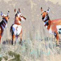 "Photo - The pastel painting ""3 Antelope"