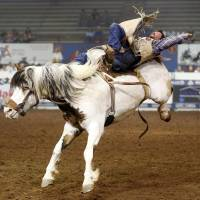 Photo - George Gillespie IV of Placerville, Calif., competes in bareback riding during the National Circuit Finals Rodeo at the Lazy E Arena in Guthrie, Okla., Saturday afternoon, April 12, 2014. Photo by Nate Billings, The Oklahoman