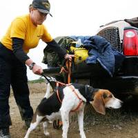 Photo - JAMISON FAMILY / SHERRILYNN JAMISON / MADYSON JAMISON / BOBBY JAMISON / SEARCH PARTY: Deborah Potter holds back Pokie, a beagle search and rescue dog ,as she and other members of Pathfinders gather equipment for the day's search at the command post at the top of the mountain. Pathfinders is a canine search and rescue organization from Moore, OK. Law enforcement officers and volunteers converged  in the small southeast Oklahoma community of Red Oak on Friday, Oct. 23, 2009, to search a heavily wooded area in the Sansbois Mountains for a missing family of three. Searches on horseback, on foot, on ATVs and in airplanes and helicopters scoured the area for any traces of the family.  Oct. 21, 2009. Photo by Jim Beckel, The Oklahoman ORG XMIT: KOD