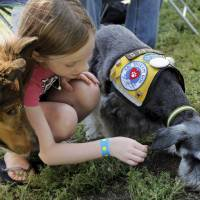 Photo - Paige Reynolds, 8, plays with therapy dogs Harley Davidson, a miniature schnauzer, right, and Zorro, a rough collie, during the Festival of the Child on Saturday. The dogs are with the Human Animal Link of Oklahoma Foundation.