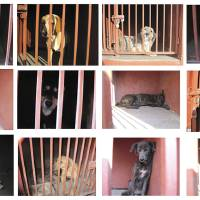 Photo - In this 12 picture composite released by the Mexico City's Attorney Generals Office on Monday Jan. 7, 2013, several dogs are shown behind bars after they were caught in the vicinity where where a woman, her baby and a teenage couple were found dead and covered in dog bites in two separate incidents in recent days. Authorities have captured 25 dogs near the scene of the attacks in the capital's poor Iztapalapa district, but rather than calm residents, photos of the forlorn dogs brought a wave of sympathy for the animals, doubts about their involvement in the killings and debate about government handling of the stray dog problem. (AP Photo/Mexico City's Attorney Generals Office)