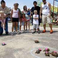 Photo - People watch the turtle races during the Blackberry festival in McLoud, Okla., Saturday, July 7, 2012. Photo by Sarah Phipps, The Oklahoman
