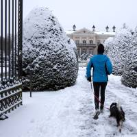 Photo - Two runners with their dog make their way down a path covered by snow at a public park in Wilrijk, Belgium on Tuesday, Jan. 15, 2013. Belgium experienced the first snow of the season on Tuesday which snarled traffic in early morning rush hour. (AP Photo/Virginia Mayo)