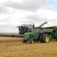 Photo - WHEAT HARVEST: Farmers in southwest Oklahoma began harvesting wheat last week. This photo was taken near Chattanooga. Photo provided by Oklahoma Wheat Commission. ORG XMIT: KOD