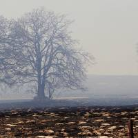 Photo - A tree is shown after  a 2011 grassfire in  Oklahoma City.  Photo by PAUL B. SOUTHERLAND,  THE OKLAHOMAN ARCHIVES