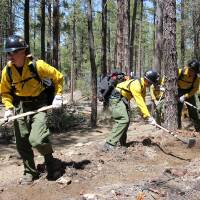 Photo - In this 2012 photo provided by the Cronkite News, the Granite Mountain Hotshot crew clears a fire line through the forest. On Sunday, June 30, 2013, 19 members of the Prescott, Ariz.-based crew were killed in the deadliest wildfire involving firefighters in the U.S. for at least 30 years. The firefighters were forced to deploy their emergency fire shelters - tent-like structures meant to shield firefighters from flames and heat - when they were caught near the central Arizona town of Yarnell, according to a state forestry spokesman. (AP Photo/Cronkite News, Connor Radnovich)