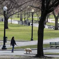 Photo - FILE - This April 6, 2011 file photo shows a woman walks a dog through Boston Common in Boston. With a view of the beautiful golden-topped State House, Boston Common is America's oldest public park. Located in the center of the city at the start of the Freedom Trail, the park remains a vibrant part of city life. (AP Photo/Charles Krupa, File)