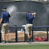 Photo - Groundskeepers spray insecticide on a swarm of bees that came from left field into the Boston Red Sox bullpen in the bottom of the third inning of a spring exhibition baseball game against the New York Yankees in Tampa, Fla., Tuesday, March 18, 2014. The game was delayed while the swarm was eradicated. (AP Photo/Kathy Willens)
