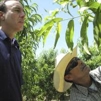 Photo - In this April 29, 2014 photo, Dan Gerawan, owner of at Gerawan Farming, Inc., left, talks with crew boss Jose Cabello in a nectarine orchard near Sanger, Calif. Gerawan is in a battle with the United Farm Workers, which wants to represent thousands of workers at the family farm. The workers last year voted on retaining the union or rejecting it, but the ballots have yet to be counted in a contested election that is now playing out in court. (AP Photo/Scott Smith)