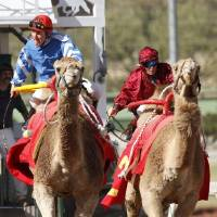 Photo -  CAMEL RACING / RACES: From left to right, G.R. Carter and Little Sheeba, and Jennifer Schmidt and Sahara Sara race during Extreme Racing, Sunday, April 10, 2011, at Remington Park in Oklahoma City. Photo by Sarah Phipps, The Oklahoman ORG XMIT: KOD