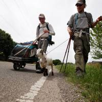 """Photo -  Matt Gregory, left, and Phillip Aldrich walk with Wrigley along Wilshire Road in Oklahoma City, Tuesday, Jan. 8, 2008. The groups is walking with a a goat  to """"Crack the Curse"""" of the Chicago Cubs and to raise money for Fred Hutchinson Cancer Research Center  by walking 19,000 miles. Photo by Sarah Phipps, The Oklahoman."""