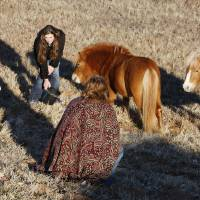 Photo - Oklahoma City Animal Control and bystanders try to contain two Shetland ponies Friday on the side of Interstate 40 one mile west of Harrah Road in Oklahoma City. They were trying to keep them from wondering onto the west bound lanes of the highway.  Photo by Paul B. Southerland, The Oklahoman  PAUL B. SOUTHERLAND - PAUL B. SOUTHERLAND