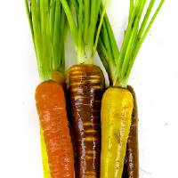 Photo - Carrots. Photo by Chris Landsberger, The Oklahoman  CHRIS LANDSBERGER