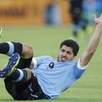 Photo - FILE - This is a Friday, Oct. 11, 2013 file photo of Uruguay's Luis Suarez, as he reacts after falling during a 2014 World Cup qualifying soccer game against Ecuador in Quito, Ecuador. Uruguay striker Luis Suarez has undergone keyhole surgery on his knee and is expected to recover in time for the World Cup. The mother of the 27-year-old Liverpool striker says he had surgery Thursday May 22, 2014 to repair damage to his meniscus. Sandra Diaz tells The Associated Press that the surgery was successful and that he is expected to recover in 2-3 weeks. Uruguay plays its first match at the World Cup against Costa Rica on June 14. The team will then face England on June 19 and Italy on June 24. (AP Photo/Martin Mejia, File)