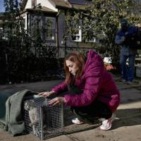 Photo -   FILE - In this Nov. 6, 2012, file photo, Dina McKenzie traps a stray cat in the New Dorp section of the Staten Island borough of New York. After Superstorm Sandy passed through, McKenzie was working with two animal rescue groups to help displaced homeowners find their pets and catch strays that need care. (AP Photo/Seth Wenig, File)