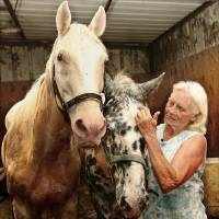 Photo - HORSE RESCUE: Elizabeth Munson tends to a pair of blind horses, Cotton, left, and Dallas in  Greener Pastures Equestrian Rescue stables south of Ada, Monday,  July 120, 2009. Cotton is 25 years old; Dallas is 17 years old.  Photo by Jim Beckel, The Oklahoman ORG XMIT: KOD