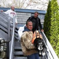 Photo -  Brian Hajeski, 41, carries a dog named Junior as he and a group of men rescue neighbors, Tuesday, Oct. 30, 2012, in Brick, N.J. in the aftermath of superstorm Sandy. (AP Photo/Julio Cortez)