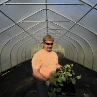 Photo - Lee Hecimovich holds squash plants as he stands among tomatoes and artichokes already planted in his seasonal high tunnel on Friday, May 23, 2014, in Palmer, Alaska. The USDA's Natural Resource Conservation Service offers financial assistance to growers using the tall hoop houses to extend growing seasons, and has awarded more funding to Alaska for them than any other state. (AP Photo/Dan Joling)