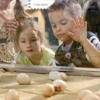 Photo - CHILDREN / KIDS / OKLAHOMA STATE FAIR KIDS DAY: Six year old Jordan Wiley and four year old Gabriel Wiley watch as baby chicks hatch at the State Fair in Oklahoma City, OK, Monday, Sept. 21, 2009. By Paul Hellstern, The Oklahoman ORG XMIT: KOD