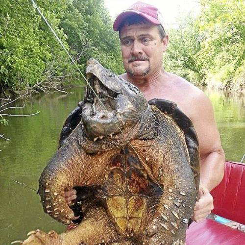 "Dave Harrell of Edmond posted this photo of himself with a 100-plus pound alligator snapping turtle on the Oklahoma Department of Wildlife Conservation Facebook page Monday with the caption, ""While catfishing we caught and released this yesterday in Mill Creek at Eufaula lake. Dave Harrell of Edmond caught it on a rod and reel and Audey Clark of Norman secured it and hauled it into the boat for pictures. It is the biggest one we had ever seen."" ODWC / Courtesy"