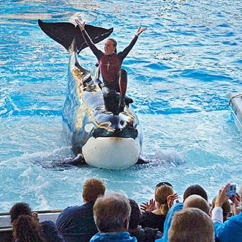 Dawn Brancheau, a whale trainer at SeaWorld Adventure Park, shown performing on December 30, 2005, was killed in an accident with a killer whale at the SeaWorld Shamu Stadium Wednesday afternoon, February 24, 2010. (JULIE FLETCHER/ORLANDO SENTINEL FILES)