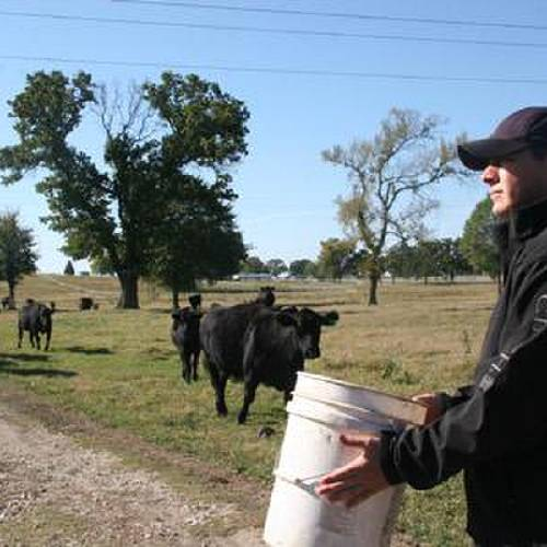 Kyle Martin-McGowan, of Sallisaw, calls his cows in for feeding time. (Sequoyah County Times photo)