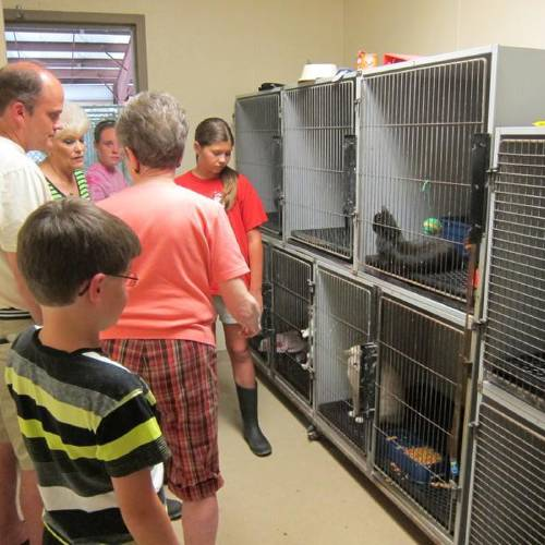 Efforts are under way to find homes for three kittens found in a dumpster behind an apartment complex in Chickasha. (Chickasha Express-Star photo)