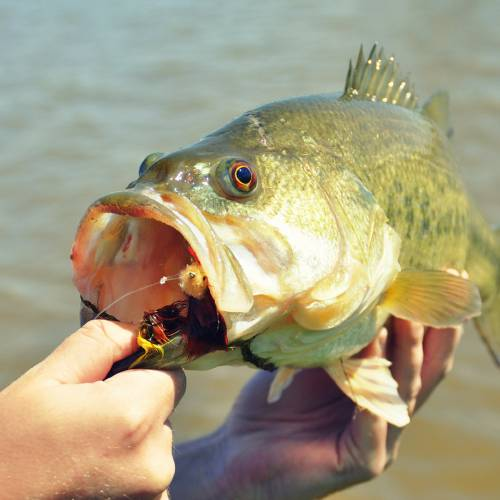Members of the Choctaw Nation will soon receive free hunting and fishing licenses.