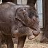 BABY ELEPHANT