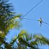 Wallenda Wirewalk