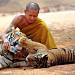 Thai wildlife officials start removing tigers from temple