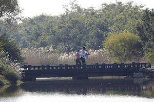 Photo - Ayako Uehara of Japan crosses a bridge with her caddie during the first round of the KEB HanaBank Championship golf tournament at Sky72 Golf Club in Incheon, west of Seoul, South Korea, Friday, Oct. 18, 2013. (AP Photo/Lee Jin-man)