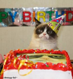 Photo - Photo via GrumpyCats.com